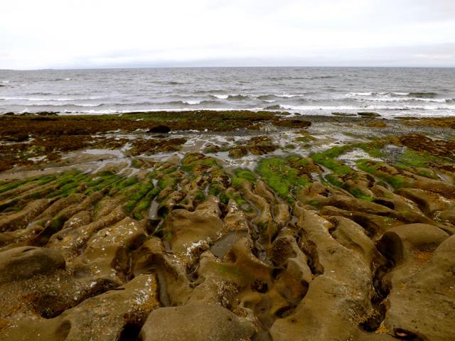 OCEAN - RUNNELS